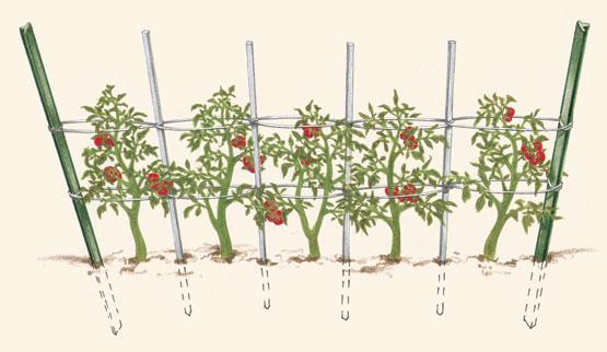 Как и из чего сделать шпалеру для томатов