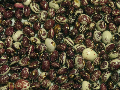 Good Mother Stallard beans, shelled.  A feast for the eyes, too!
