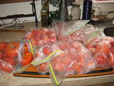 Too many tomatoes to can immediately?  I froze them, and canned at my leisure.  They resembled bags filled with croquet balls!