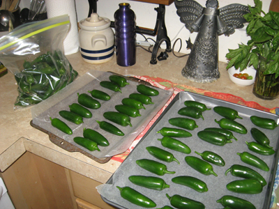 Jalapeno peppers, the Dulce (sweet/mild) variety.  I froze many and canned even more.