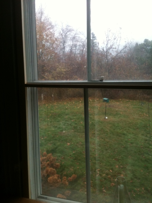 Our view, through the double-plastic'ed interior storm. I think it's just fine.
