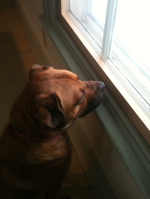 "Gordon gives the new storm window his ""I can still see the chipmunks through this stuff"" Seal of Approval."