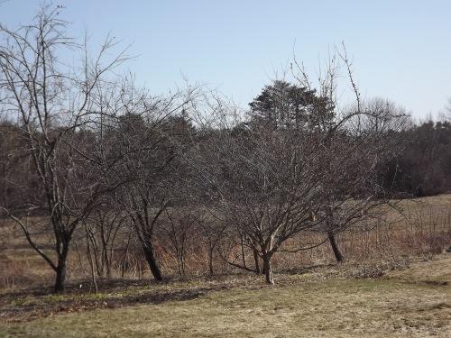 Orchard_Close